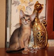 Абиссинские котята - лучик солнышка в ваш дом! Доставка!